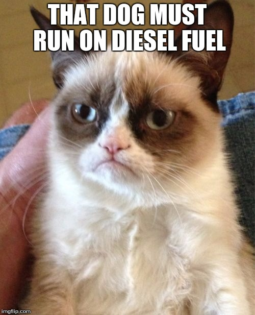 Grumpy Cat Meme | THAT DOG MUST RUN ON DIESEL FUEL | image tagged in memes,grumpy cat | made w/ Imgflip meme maker