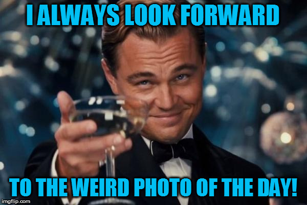Leonardo Dicaprio Cheers Meme | I ALWAYS LOOK FORWARD TO THE WEIRD PHOTO OF THE DAY! | image tagged in memes,leonardo dicaprio cheers | made w/ Imgflip meme maker