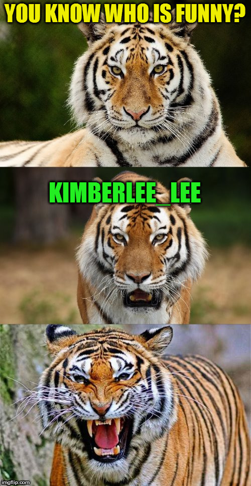 Tiger Puns | YOU KNOW WHO IS FUNNY? KIMBERLEE_LEE | image tagged in tiger puns | made w/ Imgflip meme maker
