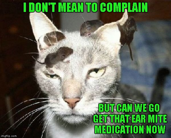 Maybe we waited a little too long this time... | I DON'T MEAN TO COMPLAIN BUT CAN WE GO GET THAT EAR MITE MEDICATION NOW | image tagged in cat  mice,memes,funny animals,funny,animals,cats | made w/ Imgflip meme maker