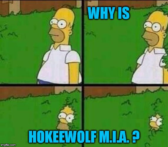 Homer Simpson in Bush - Large | WHY IS HOKEEWOLF M.I.A. ? | image tagged in homer simpson in bush - large | made w/ Imgflip meme maker
