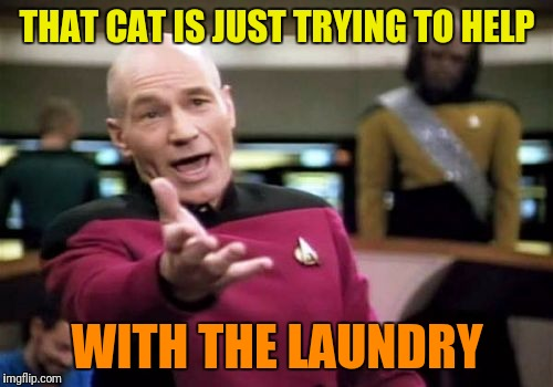 Picard Wtf Meme | THAT CAT IS JUST TRYING TO HELP WITH THE LAUNDRY | image tagged in memes,picard wtf | made w/ Imgflip meme maker