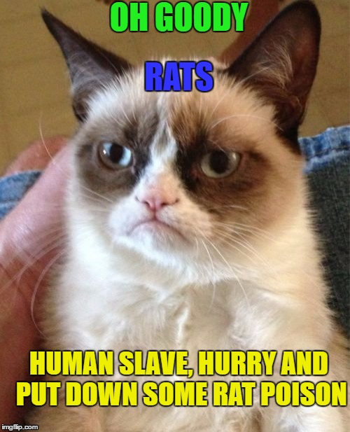 Grumpy Cat Meme | OH GOODY RATS HUMAN SLAVE, HURRY AND PUT DOWN SOME RAT POISON | image tagged in memes,grumpy cat | made w/ Imgflip meme maker
