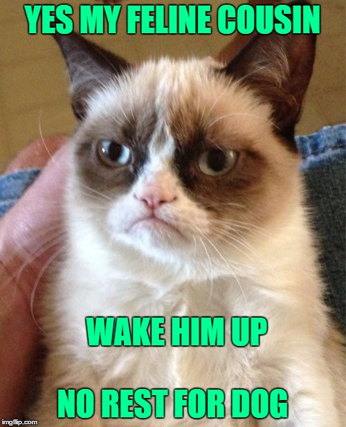 Grumpy Cat Meme | YES MY FELINE COUSIN NO REST FOR DOG WAKE HIM UP | image tagged in memes,grumpy cat | made w/ Imgflip meme maker