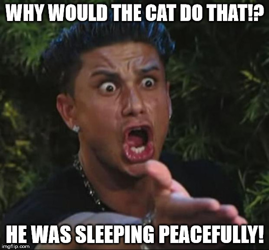Pauly | WHY WOULD THE CAT DO THAT!? HE WAS SLEEPING PEACEFULLY! | image tagged in pauly | made w/ Imgflip meme maker