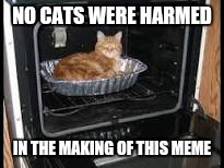 Cat in oven | NO CATS WERE HARMED IN THE MAKING OF THIS MEME | image tagged in cat in oven | made w/ Imgflip meme maker
