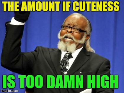 Too Damn High Meme | THE AMOUNT IF CUTENESS IS TOO DAMN HIGH | image tagged in memes,too damn high | made w/ Imgflip meme maker