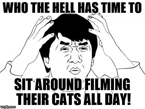 WHO THE HELL HAS TIME TO SIT AROUND FILMING THEIR CATS ALL DAY! | made w/ Imgflip meme maker