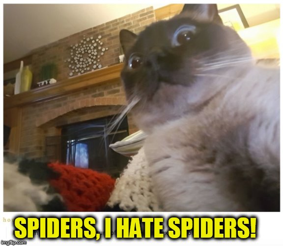 SPIDERS, I HATE SPIDERS! | made w/ Imgflip meme maker