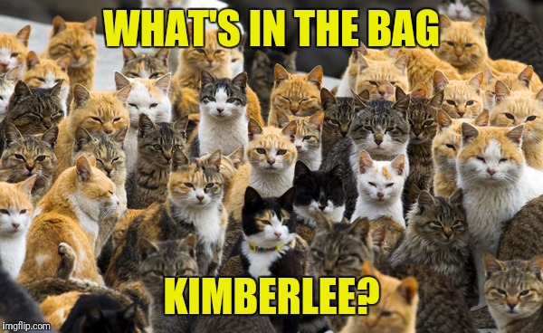 WHAT'S IN THE BAG KIMBERLEE? | made w/ Imgflip meme maker