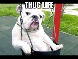 Thug Life Dog - Imgflip
