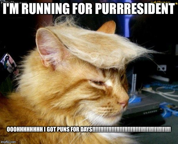 donald trump cat |  I'M RUNNING FOR PURRRESIDENT; OOOHHHHHHHH I GOT PUNS FOR DAYS!!!!!!!!!!!!!!!!!!!!!!!!!!!!!!!!!!!!!!!!!!!!!!!!! | image tagged in donald trump cat | made w/ Imgflip meme maker