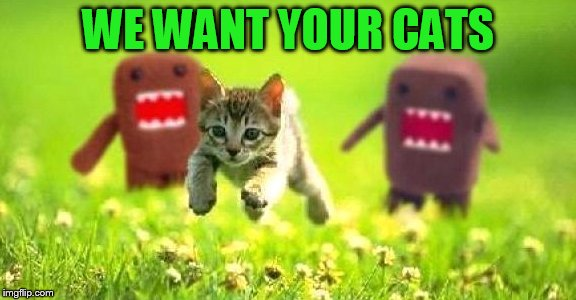 WE WANT YOUR CATS | made w/ Imgflip meme maker