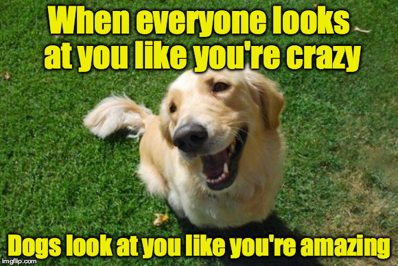Why I like dogs | When everyone looks at you like you're crazy Dogs look at you like you're amazing | image tagged in happy dog | made w/ Imgflip meme maker