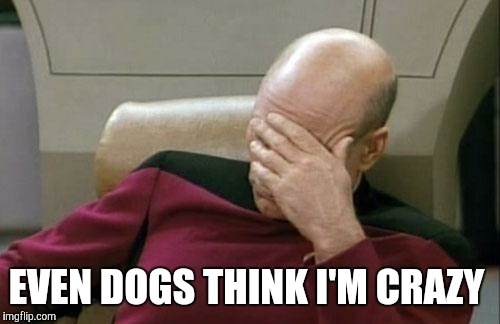 Captain Picard Facepalm Meme | EVEN DOGS THINK I'M CRAZY | image tagged in memes,captain picard facepalm | made w/ Imgflip meme maker