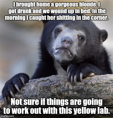 Confession Bear Meme | I brought home a gorgeous blonde. I got drunk and we wound up in bed. In the morning I caught her shitting in the corner. Not sure if things | image tagged in memes,confession bear | made w/ Imgflip meme maker