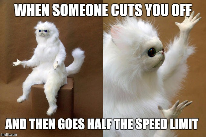 Persian Cat Room Guardian | WHEN SOMEONE CUTS YOU OFF AND THEN GOES HALF THE SPEED LIMIT | image tagged in memes,persian cat room guardian | made w/ Imgflip meme maker