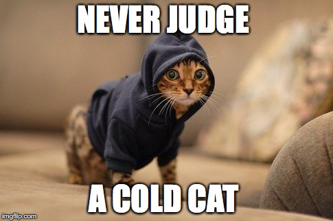 Hoody Cat | NEVER JUDGE A COLD CAT | image tagged in memes,hoody cat | made w/ Imgflip meme maker