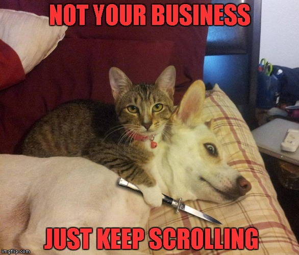 Loose lips sink ships... | NOT YOUR BUSINESS JUST KEEP SCROLLING | image tagged in memes,cats,funny animals,animals,cat dog & knife | made w/ Imgflip meme maker