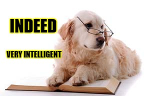 INDEED VERY INTELLIGENT | made w/ Imgflip meme maker