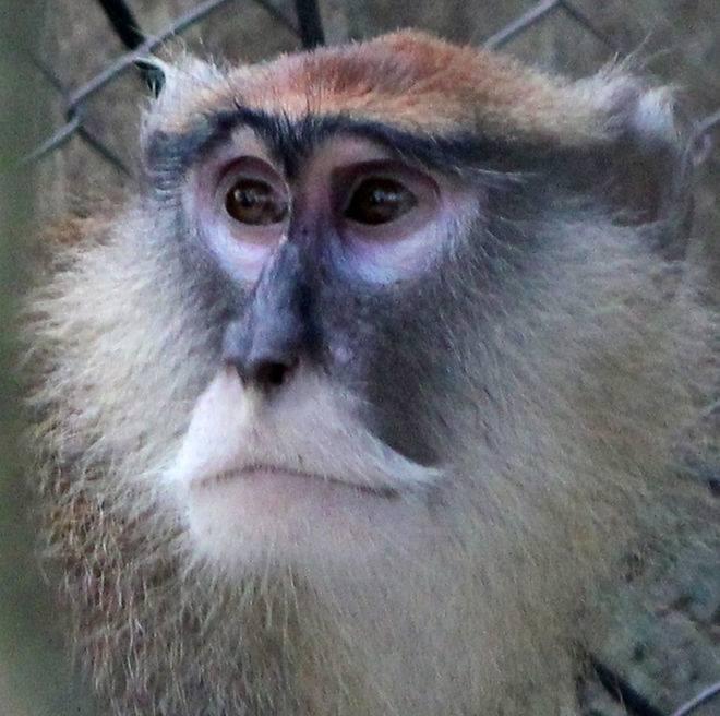 monkey blank template imgflip