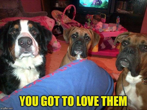 dogs | YOU GOT TO LOVE THEM | image tagged in dogs | made w/ Imgflip meme maker