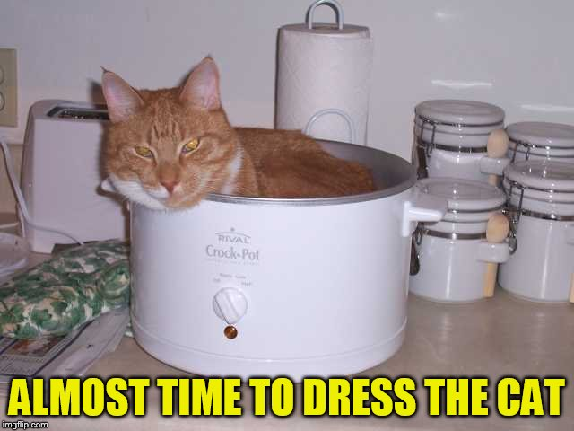 ALMOST TIME TO DRESS THE CAT | made w/ Imgflip meme maker