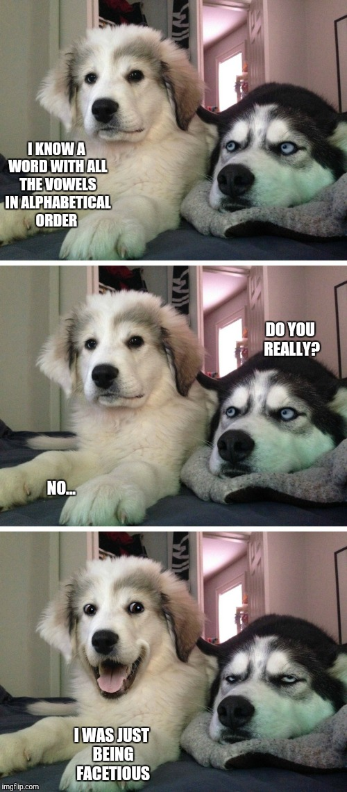 Bad pun dogs | I KNOW A WORD WITH ALL THE VOWELS IN ALPHABETICAL ORDER I WAS JUST BEING FACETIOUS DO YOU REALLY? NO... | image tagged in bad pun dogs | made w/ Imgflip meme maker