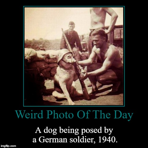 I'm Surprised They Got The Helmet To Stay On The Dog's Head | Weird Photo Of The Day | A dog being posed by a German soldier, 1940. | image tagged in funny,demotivationals,weird,photo of the day,german shepherd,soldier | made w/ Imgflip demotivational maker