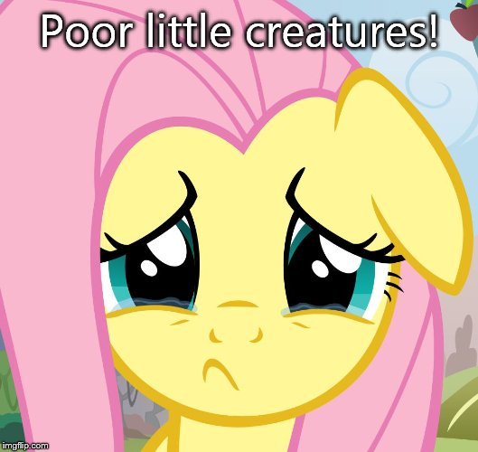 sad fluttershy | Poor little creatures! | image tagged in sad fluttershy | made w/ Imgflip meme maker