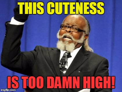 Too Damn High Meme | THIS CUTENESS IS TOO DAMN HIGH! | image tagged in memes,too damn high | made w/ Imgflip meme maker