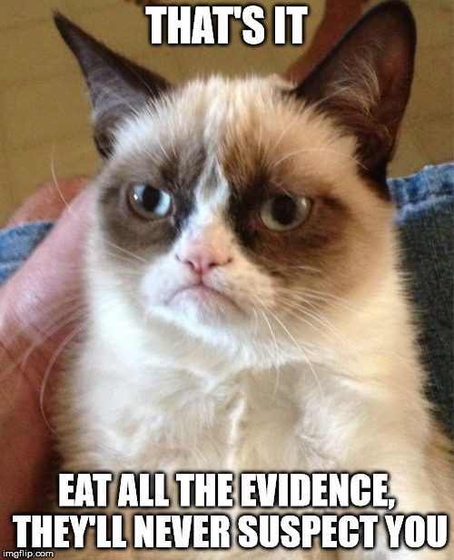 Grumpy Cat Meme | THAT'S IT EAT ALL THE EVIDENCE, THEY'LL NEVER SUSPECT YOU | image tagged in memes,grumpy cat | made w/ Imgflip meme maker