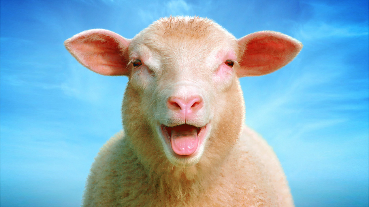 Laughing-sheep Blank Template - Imgflip
