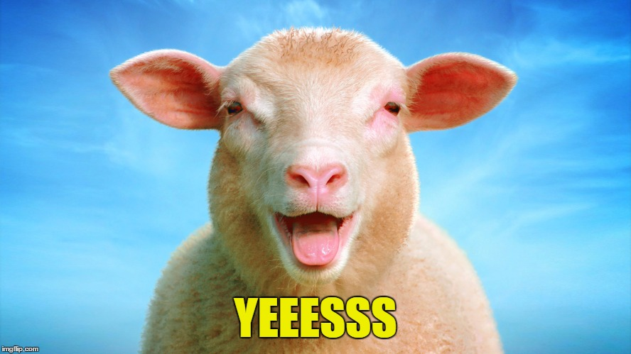 Laughing-sheep | YEEESSS | image tagged in laughing-sheep | made w/ Imgflip meme maker