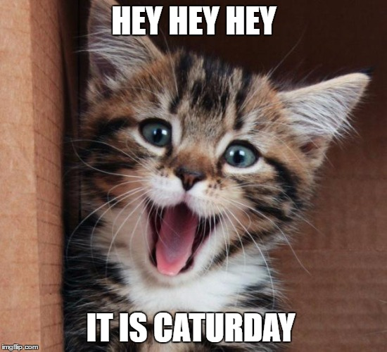 Happy cat | HEY HEY HEY IT IS CATURDAY | image tagged in happy cat | made w/ Imgflip meme maker