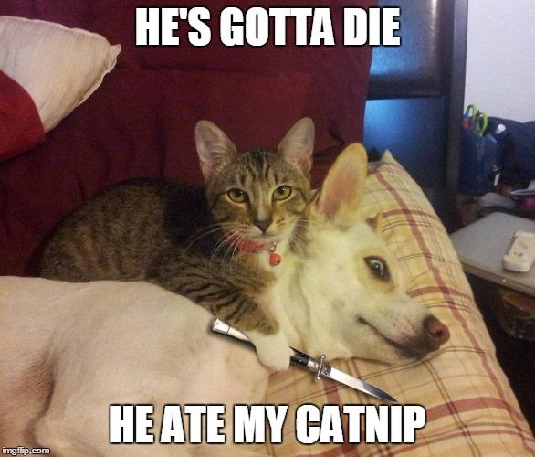 Fucker Cat Memes