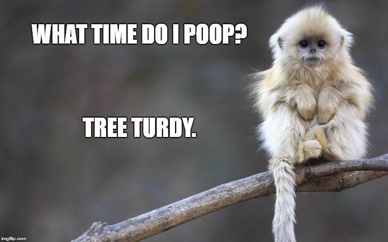 Monkey see, monkey doo | WHAT TIME DO I POOP? TREE TURDY. | image tagged in funny,memes,funny memes,monkey,poop,funny animals | made w/ Imgflip meme maker