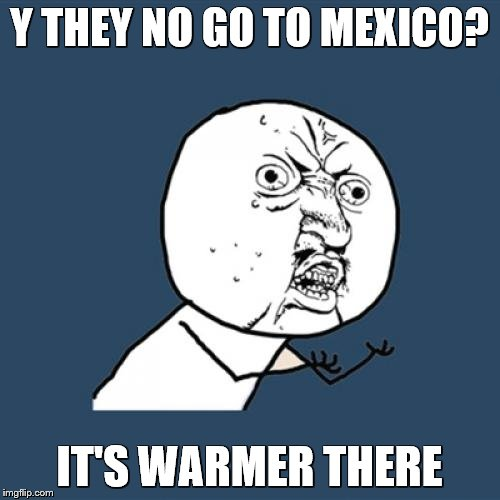 Y U No Meme | Y THEY NO GO TO MEXICO? IT'S WARMER THERE | image tagged in memes,y u no | made w/ Imgflip meme maker
