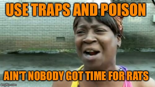 Aint Nobody Got Time For That Meme | USE TRAPS AND POISON AIN'T NOBODY GOT TIME FOR RATS | image tagged in memes,aint nobody got time for that | made w/ Imgflip meme maker