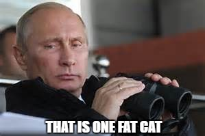 THAT IS ONE FAT CAT | made w/ Imgflip meme maker