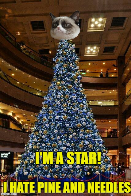 I HATE PINE AND NEEDLES I'M A STAR! | made w/ Imgflip meme maker
