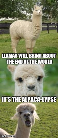 Alpaca Bad Pun | LLAMAS WILL BRING ABOUT THE END OF THE WORLD IT'S THE ALPACA-LYPSE | image tagged in alpaca bad pun | made w/ Imgflip meme maker