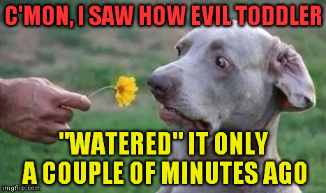"I_pissed_on_that_some_minutes_ago | C'MON, I SAW HOW EVIL TODDLER ""WATERED"" IT ONLY A COUPLE OF MINUTES AGO 