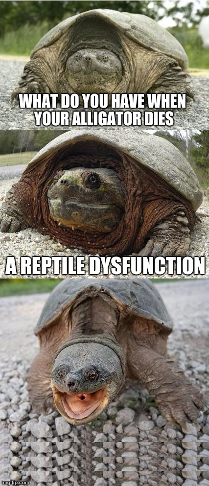 Bad Pun Tortoise | WHAT DO YOU HAVE WHEN YOUR ALLIGATOR DIES A REPTILE DYSFUNCTION | image tagged in bad pun tortoise | made w/ Imgflip meme maker
