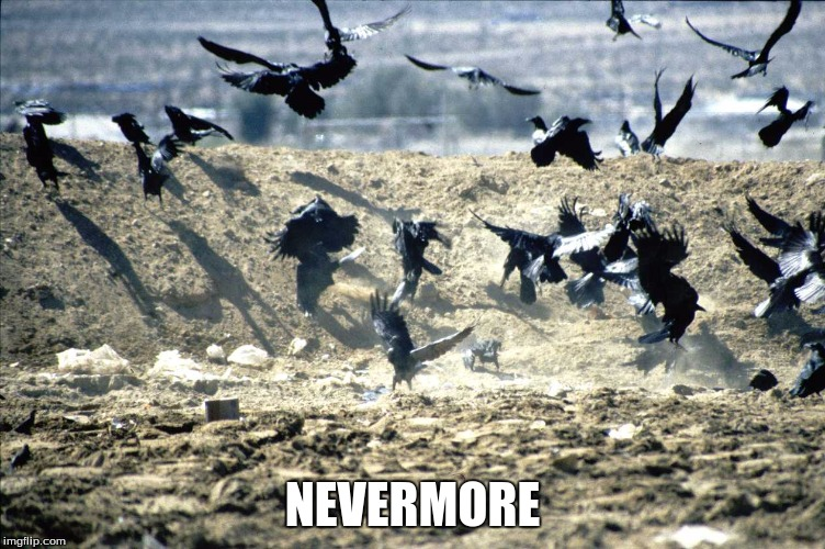 NEVERMORE | made w/ Imgflip meme maker