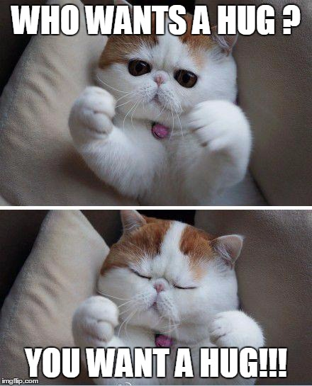I Want To Cuddle With You Quotes: Cats Need Hug