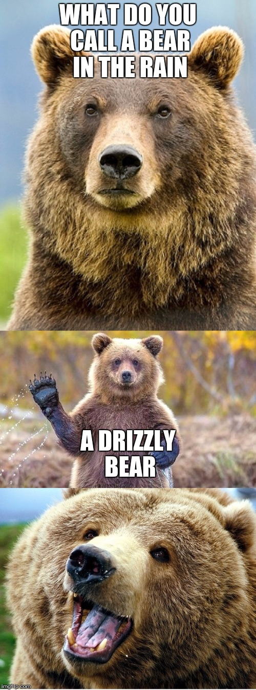 BAD PUN BEAR |  WHAT DO YOU CALL A BEAR IN THE RAIN; A DRIZZLY BEAR | image tagged in bad pun bear | made w/ Imgflip meme maker