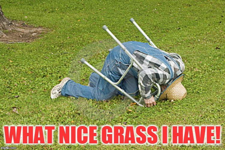 WHAT NICE GRASS I HAVE! | made w/ Imgflip meme maker