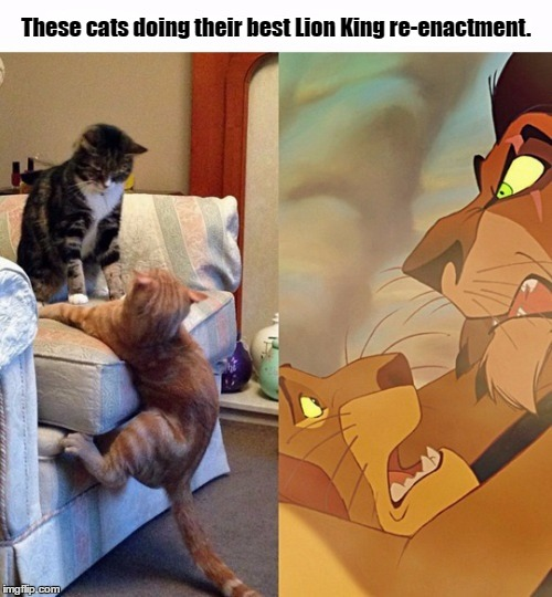 This Is By Far Hilarious, Even Though I'm Not A Cat Person  | These cats doing their best Lion King re-enactment. | image tagged in memes,cats,lion king,disney,re-enactment,funny | made w/ Imgflip meme maker