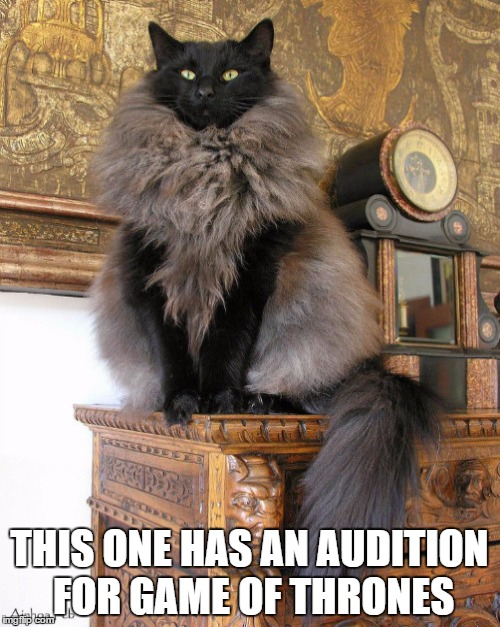 THIS ONE HAS AN AUDITION FOR GAME OF THRONES | made w/ Imgflip meme maker